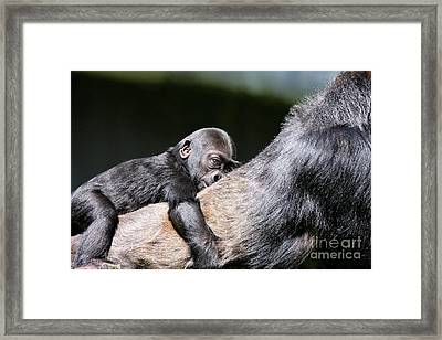 Through The Eyes Of Hasani Framed Print by Wingsdomain Art and Photography