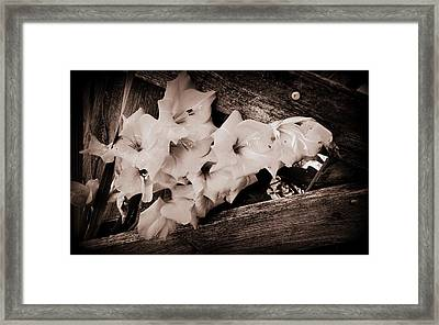 Through The Fence Framed Print by Diane Reed