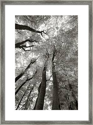 Through The Forest 2 Framed Print by Marjan Jankovic