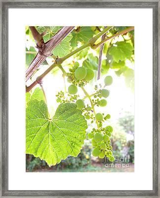 Through The Grapevine Framed Print by Kaira Burt
