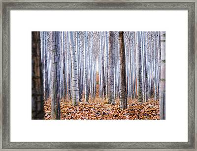 Through The Layers Framed Print