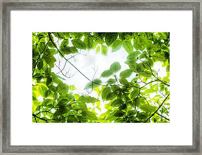 Framed Print featuring the photograph Through The Leaves by David Coblitz