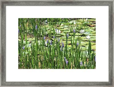 Through The Lily Pond Framed Print