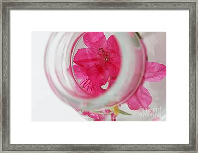 Through The Looking Glass Framed Print by Amanda Barcon