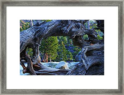 Through The Looking Glass Framed Print by Sean Sarsfield