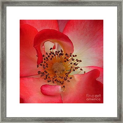 Through The Opening To The Center Framed Print by Delorse Lovelady