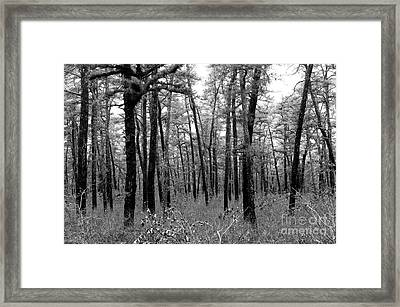 Through The Pinelands Framed Print by John Rizzuto