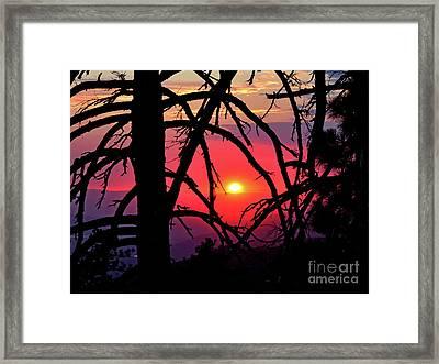 Through The Pines Framed Print