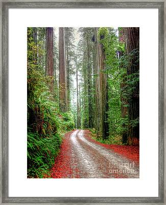 Through The Redwood Forest Framed Print