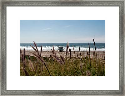 Through The Reeds Framed Print