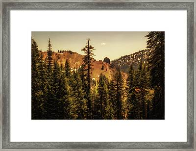 Through The Tree Tops Framed Print