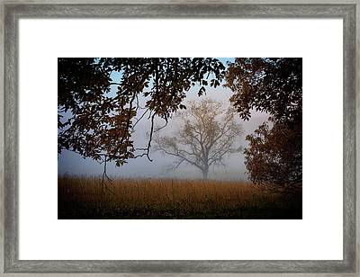 Through The Trees In The Mist Framed Print by Rick Berk