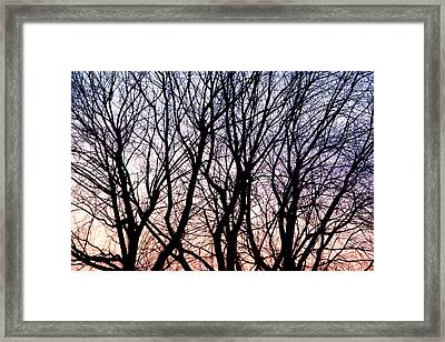 Through The Trees Framed Print by Martin Rochefort
