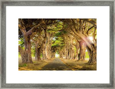 Through The Trees Framed Print by Peter Irwindale