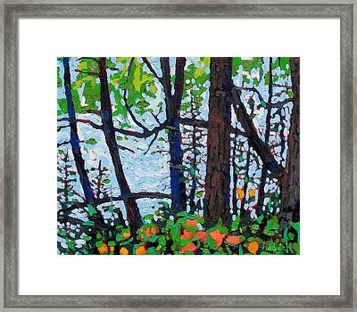 Through The Trees Framed Print by Phil Chadwick