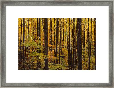 Through The Yellow Veil Framed Print