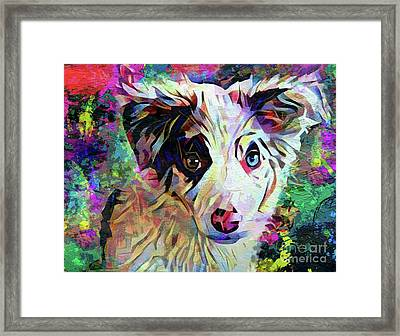 Throw The Ball Framed Print by Jon Neidert