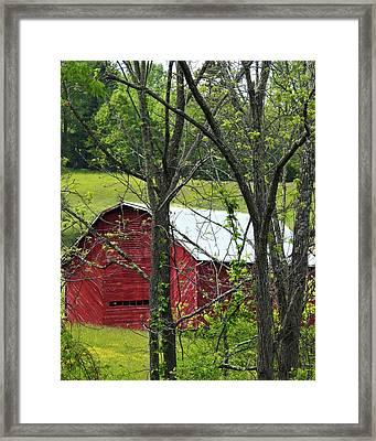 Thru A Veil Of Trees  Framed Print by Laura Ragland