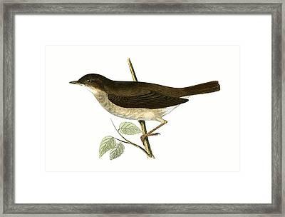 Thrush Nightingale Framed Print