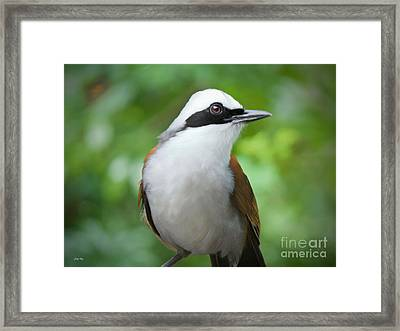 Thrush Pose Framed Print