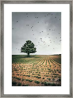 Thunder Arising Framed Print by Evelina Kremsdorf