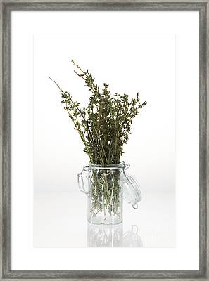 Thyme Framed Print by Wolfgang Steiner