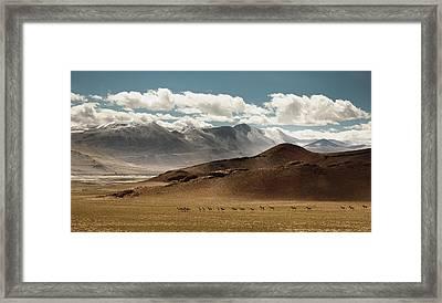 Tibetan Wild Horses Framed Print by Sebastian Wahlhuetter