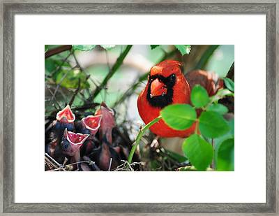 Ticked Off Framed Print by Frozen in Time Fine Art Photography