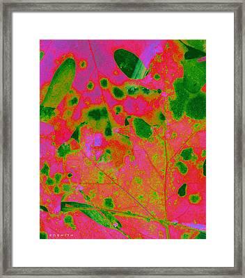 Tickled Pink Framed Print