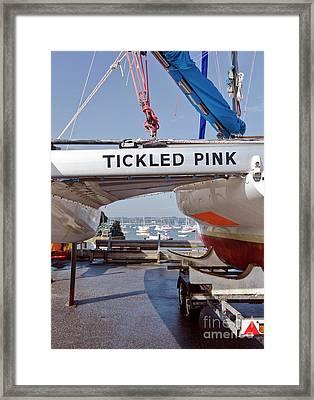 Tickled Pink In Mylor Cornwall Framed Print
