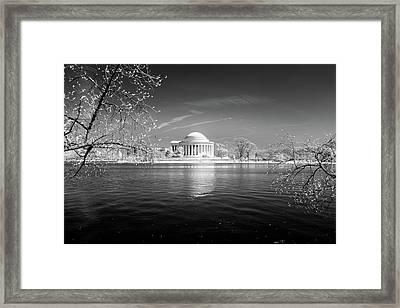 Tidal Basin Jefferson Memorial Framed Print