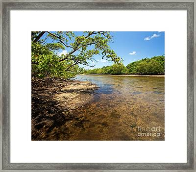 Tidal Mangrove Estuary - Von D Mizell Eula Johnson State Park Framed Print