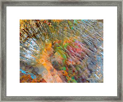 Tidal Pool And Coral Framed Print by Todd Breitling