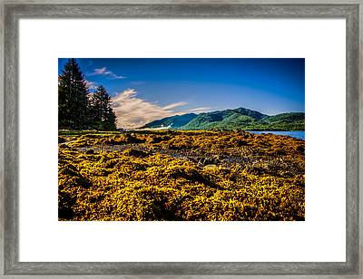 Tide Pool Framed Print by Robin Williams