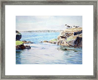 Tidepool With Terns Framed Print by Christopher Reid