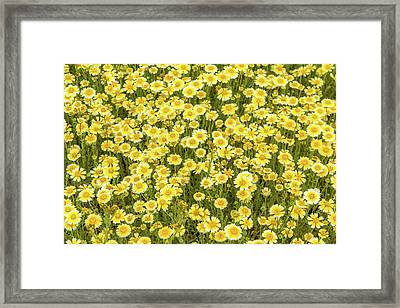 Framed Print featuring the photograph Tidy Tips by Marc Crumpler