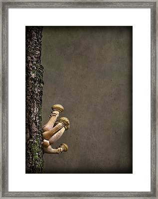 Ties That Bind Framed Print by Evelina Kremsdorf