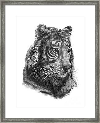 Tiger 1 Framed Print