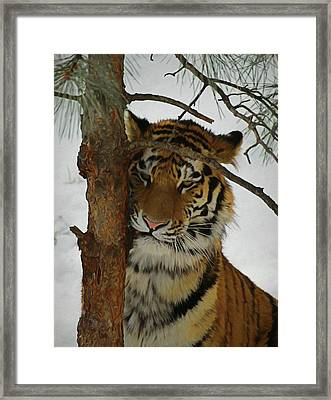 Tiger 2 Da Framed Print