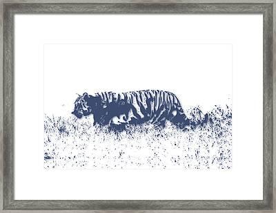 Tiger 4 Framed Print by Joe Hamilton