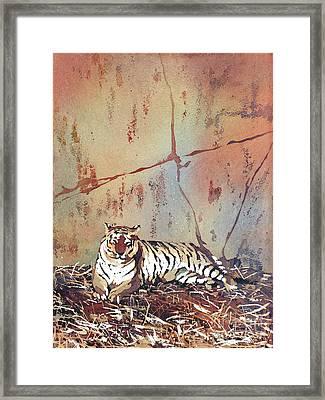 Tiger At Rest Framed Print by Ryan Fox