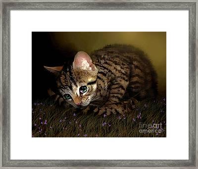 Tiger Ball Framed Print