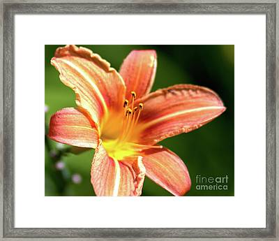Framed Print featuring the photograph Tiger Bright by Baggieoldboy