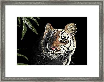 Tiger Framed Print by Carole Boyd