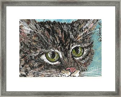 Tiger Cat Framed Print