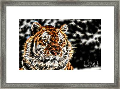 Tiger Collection Framed Print by Marvin Blaine