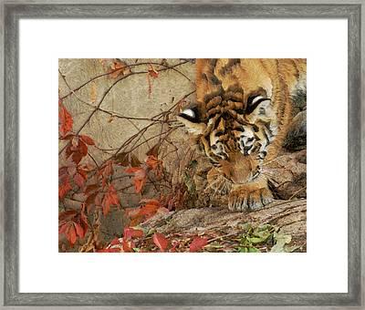 Tiger Cub 3 Framed Print by Ernie Echols