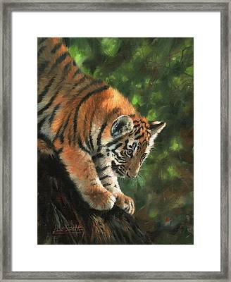 Tiger Cub Climbing Down Tree Framed Print by David Stribbling