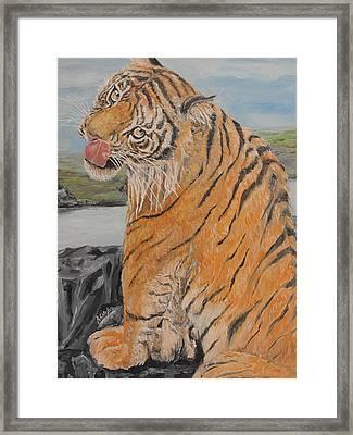 Tiger Cub Framed Print by Rajesh Chopra