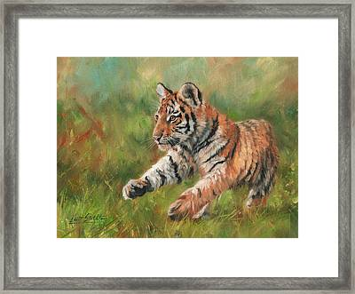 Tiger Cub Running Framed Print by David Stribbling